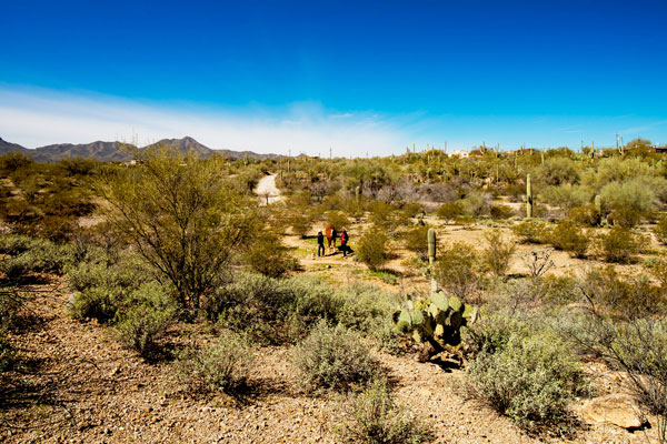 cottonwood tucson - arizona mental health and behavioral health treatment center - addiction rehab in arizona - detox facility in tucson - alcohol and drug treatment center