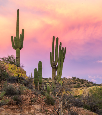 Sonoran sunset with cacti - family