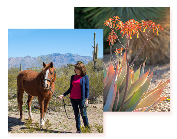 Cottonwood tucson - equine therapy - horses - behavioral health treatment center - addiction rehab in tucson arizona